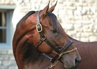 Museum to Unveil Permanent American Pharoah Exhibit