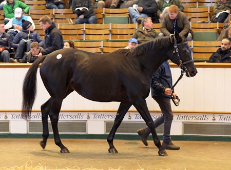 2016 Tattersalls December Mare Sale  Lot 1759 Eblouissante (USA) B/Br.M. by Bernardini (USA) x Vertigineux (USA) 1,100,000 Consignor: The National Stud Ltd. — Purchaser: Summerwind Farm