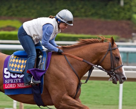 Lord Nelson Scenes at Santa Anita in preparation for 2016 Breeders' Cup on Oct. 30, 2016, in Arcadia, CA.