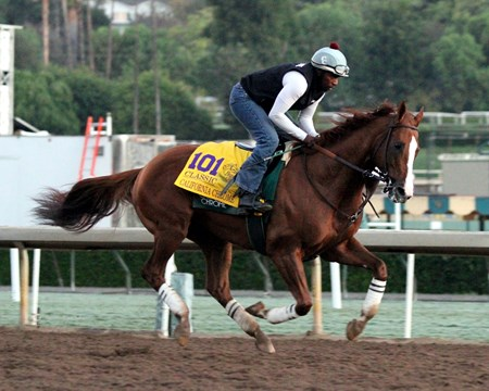California Chrome on the track at Santa Anita Park on November 2, 2016. Photo By: Chad B. Harmon
