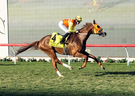 Texas Ryano wins the 2016 Hollywood Turf Cup