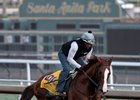 California Chrome gallops Nov. 2 at Santa Anita Park