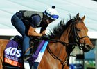 Lady Eli, Stellar Wind Out of November Sale