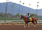 California Chrome prepares for the Breeders' Cup Classic Nov. 2 at Santa Anita Park.