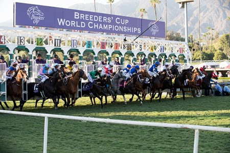 The field leaving the starting gate in the Breeders' Cup Mile at Santa Anita on 11/5/16.