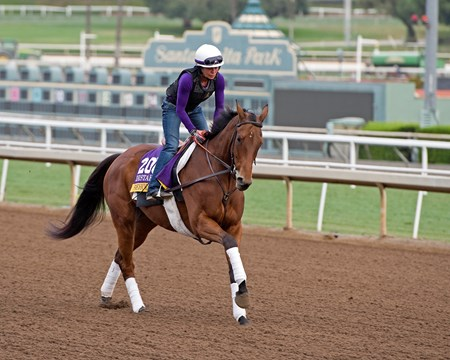 Beholder Works at Santa Anita in preparation for 2016 Breeders' Cup on Nov. 1, 2016, in Arcadia, CA.