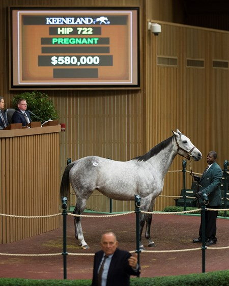 Hip 722 Bryan's Jewel in foal to Speightstown from Bedouin Bloodstock brings $580,000 from Jane Winegardner and M/M Wayne Sweezey. Keeneland November Sales on Nov. 10, 2016, in Lexington, Ky.