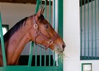Beholder settles in at Spendthrift Farm near Lexington.