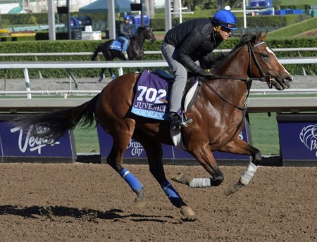 Gormley gallops at Santa Anita Nov. 2, 2016 in preparation for his appearance in the Breeders' Cup in Arcadia, California.