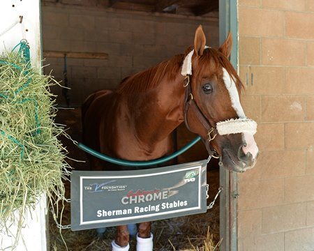 California Chrome after his tight second-place finish in the Breeders' Cup Classic