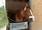 California Chrome at Santa Anita