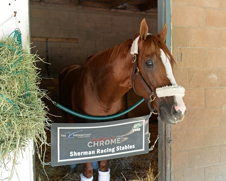 California Chrome  Morning after the Breeders' Cup Classic 2016 Breeders' Cup on Nov. 6, 2016, in Arcadia, CA.