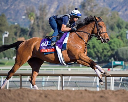 Lady Eli Morning scenes at Santa Anita in preparation for 2016 Breeders' Cup on Nov. 2, 2016, in Arcadia, CA.