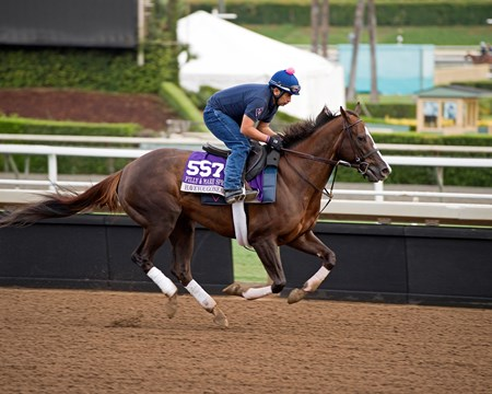 Haveyougoneaway Works at Santa Anita in preparation for 2016 Breeders' Cup on Nov. 1, 2016, in Arcadia, CA.