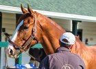Darby Dan Farm's Shackleford is one of 11 stallions represented at a Dec. 1 live auction