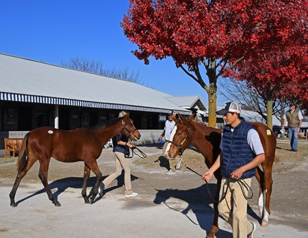 Vanning. Horses leaving another Keeneland November sales. Keeneland November Sales on Nov. 18, 2016, in Lexington, Ky.