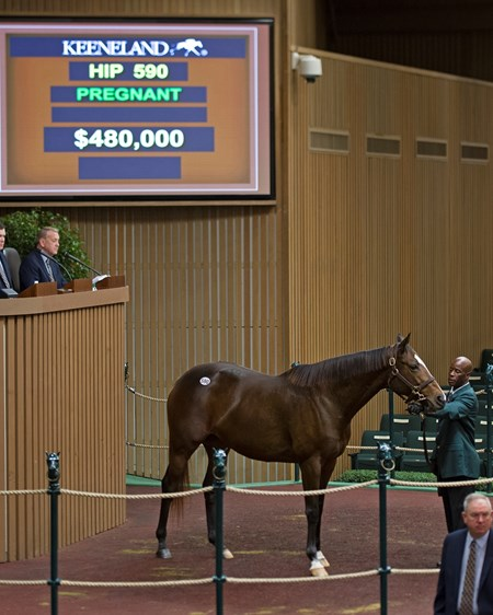 Hip 590 Sea Island from Claiborne brings $480,000 from Elliott Walden with WinStar Keeneland November Sales on Nov. 10, 2016, in Lexington, Ky.