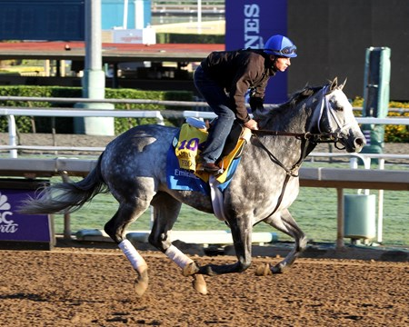 Frosted on the track at Santa Anita on November 2, 2016.