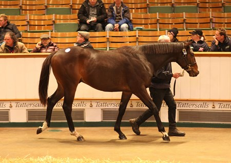 Lot 166, a Frankel (GB) / Debonnaire (GB) colt sold for 250,000gns to agent Charlie Gordon-Watson at the Tattersalls December Yearling sale.