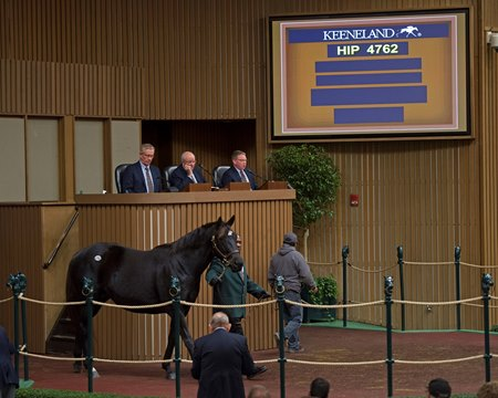 Hip 4762 was the final horse into the sales ring at the Keeneland November sale
