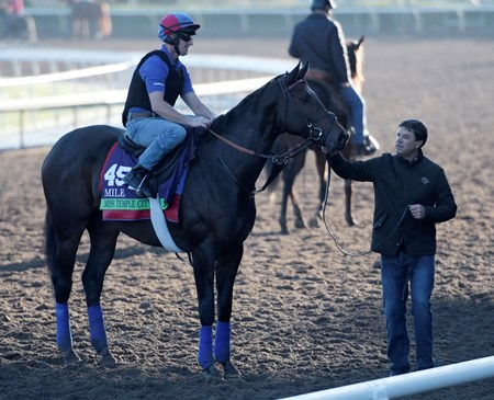 Miss Temple City is held by trainer Graham Motion after a gallop at Santa Anita Nov. 2, 2016 in preparation for her appearance in the Breeders' Cup in Arcadia, California.