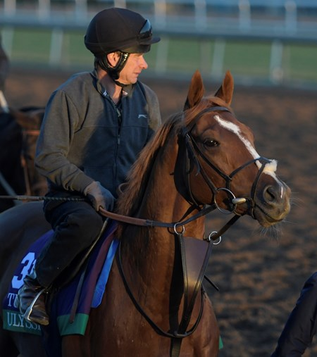 Ulysses out for a gallop at Santa Anita Nov. 3, 2016 in preparation for his appearance in the Breeders' Cup in Arcadia, California.