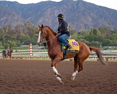 California Chrome Morning scenes at Santa Anita in preparation for 2016 Breeders' Cup on Nov. 3, 2016, in Arcadia, CA.