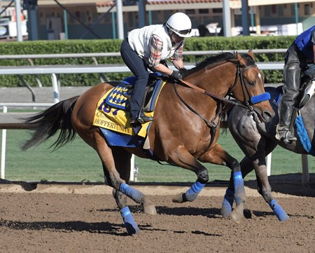 Hoppertunity gallops at Santa Anita Nov. 2, 2016 in preparation for his appearance in the Breeders' Cup in Arcadia, California.