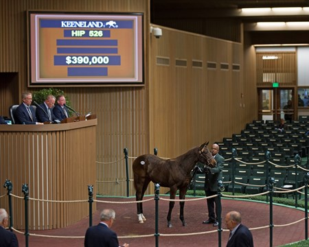 Hip 526 filly by Speightstown from Nikkis Smartypants and Bedouin Bloodstock bought for $390,000 by John Moynihan Keeneland November Sales on Nov. 10, 2016, in Lexington, Ky.
