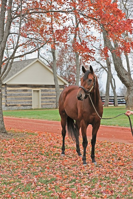 Big Brown at Three Chimneys Farm near Midway, Ky. BigBrown image805 Photo by Anne M. Eberhardt