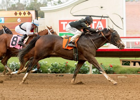 Term of Art wins the 2016 Cecil B. DeMille Stakes at Del Mar Thoroughbred Club