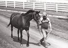 Likely Exchange walking to the barn with groom William Williamson, Jr. in 1985.