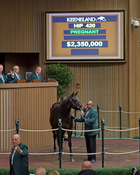 Hip 420 Feathered in foal to War Front brings $2.35M from Summer Wind Keeneland November Sales on Nov. 9, 2016, in Lexington, Ky.