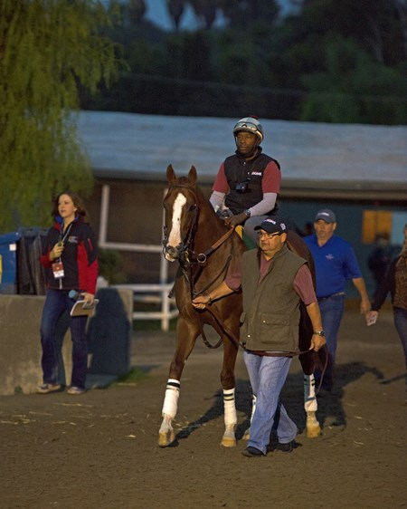California Chrome with Alan Sherman Works at Santa Anita in preparation for 2016 Breeders' Cup on Nov. 1, 2016, in Arcadia, CA.