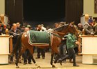 Replete Tops Tattersalls Mare Sale Day 3