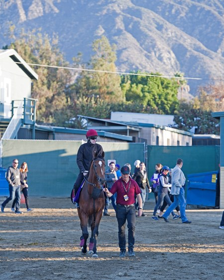 Highland Reel Morning scenes at Santa Anita in preparation for 2016 Breeders' Cup on Nov. 3, 2016, in Arcadia, CA.