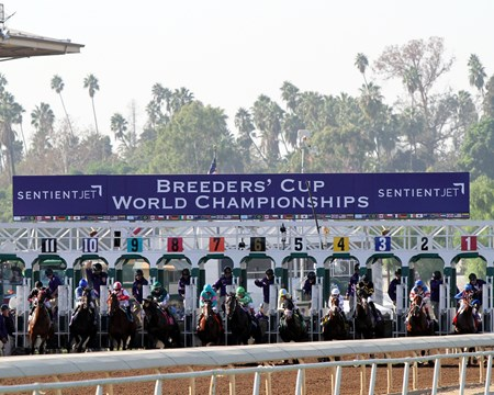 The horses leave the starting gate for the Breeders' Cup Juvenile (GI) at Santa Anita on November 5, 2016.