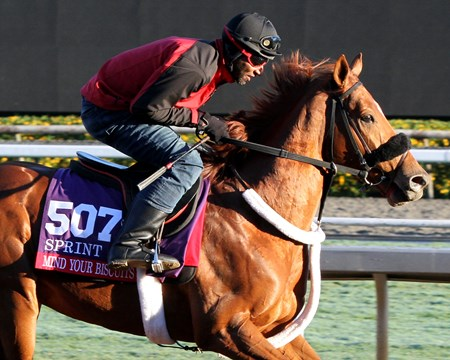 Mind Your Biscuits on the track at Santa Anita on November 2, 2016.