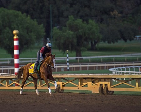 California Chrome Works at Santa Anita in preparation for 2016 Breeders' Cup on Nov. 1, 2016, in Arcadia, CA.