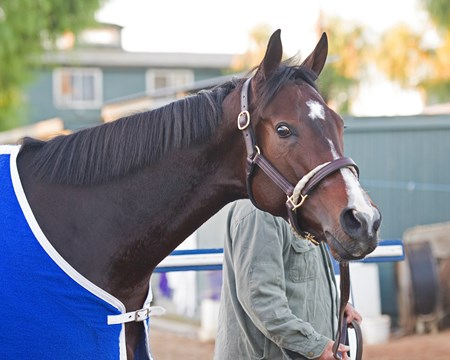 Songbird Morning scenes at Santa Anita in preparation for 2016 Breeders' Cup on Nov. 2, 2016, in Arcadia, CA.