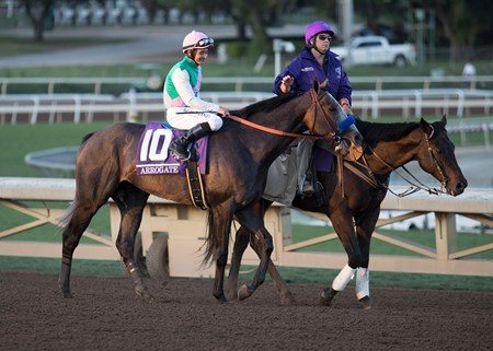 Arrogate and Mike Smith before the start of the Breeders' Cup Classic at Santa Anita on 11/5/16.