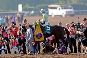 Trainer Mark Casse leads Classic Empire to the winners' circle, after winning the Breeders' Cup Juvenile