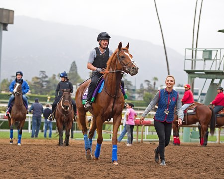 Ulysses and other European horses leave the turf course. Works at Santa Anita in preparation for 2016 Breeders' Cup on Nov. 1, 2016, in Arcadia, CA.