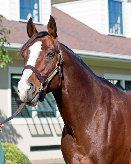 Union Rags 2016