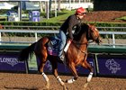 Sweeping Paddy works at Santa Anita prior to her start in the Breeders' Cup Juvenile Fillies Turf