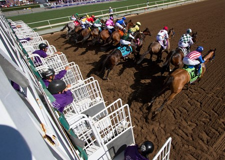 The field leaving the starting gate in the 14 Hands Winery Breeders' Cup Juvenile Filles on  at Santa Anita on 11/5/16.