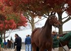Keeneland's November Opening Session Soars