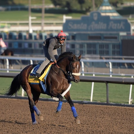 Effinex out for a gallop at Santa Anita Nov. 3, 2016 in preparation for his appearance in the Breeders' Cup in Arcadia, California.