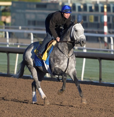 Frosted gallops at Santa Anita Nov. 2, 2016 in preparation for his appearance in the Breeders' Cup in Arcadia, California.
