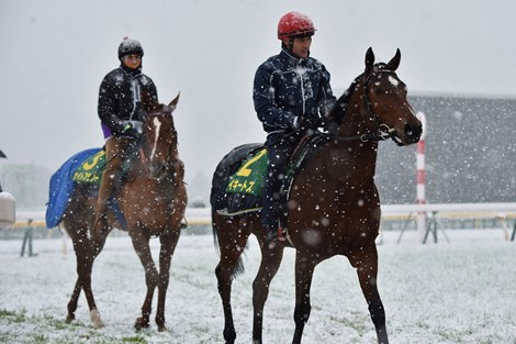 Snow Rain In Lead Up To Japan Cup Bloodhorse